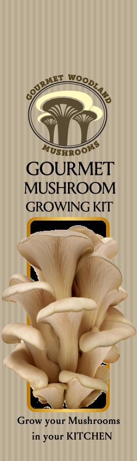 55 elegant packaging designs agriculture packaging design project packaging design by chaitanya s for gourmet woodland mushrooms design 12091810 solutioingenieria Images