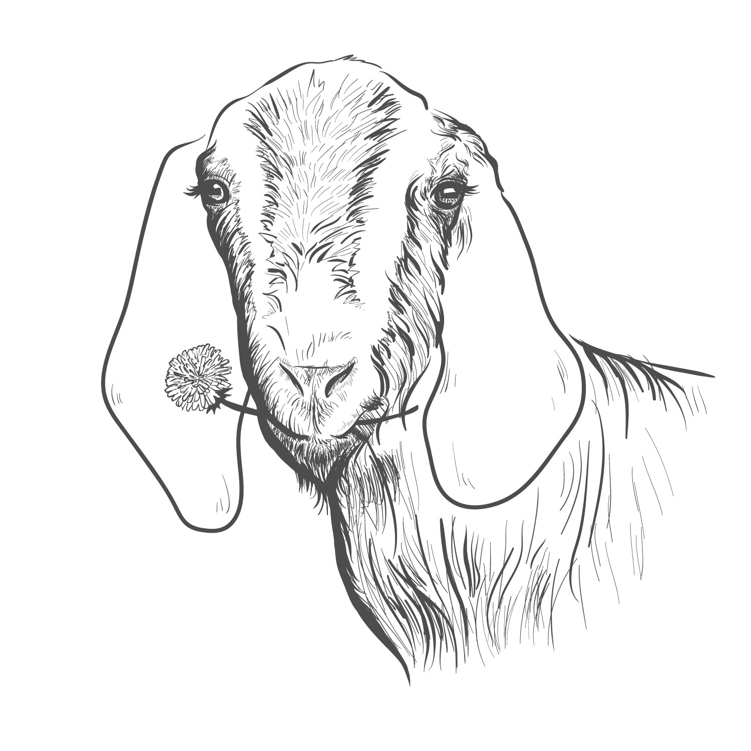 Line Drawing Goat : Personable playful graphic designs for a business in