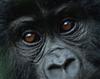 SL8R's profile picture