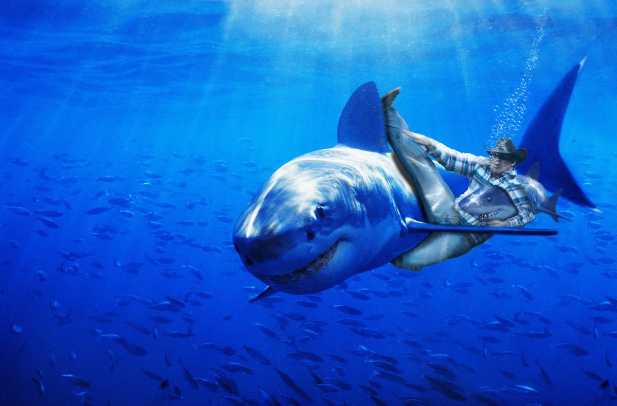 Cowboy riding on a shark