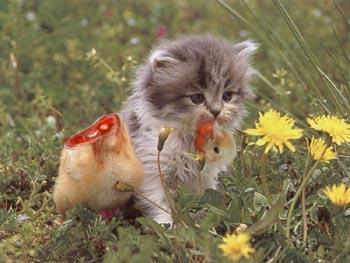 Image result for evil animals